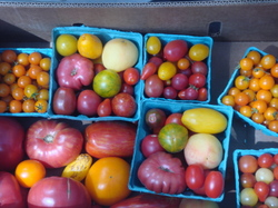 Heirloom_tomatoes_3